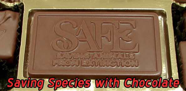 safe-chocolates